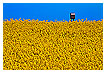 2749 - Rapeseed Mail - -